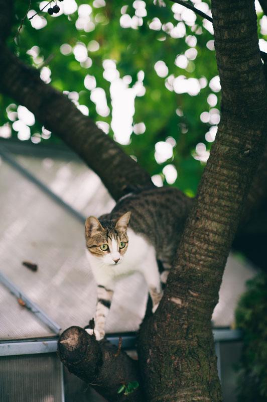 adopta un animal, catei salvati, ferma animalelor, pisici salvate, pisicile salveaza lumea, animale fotogenice, animale prietenoase, caini ce dorm in canapea, pisici pe acoperis